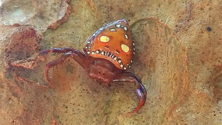 Spider - Blog pic